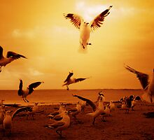 Seagulls by Andrew  Maccoll