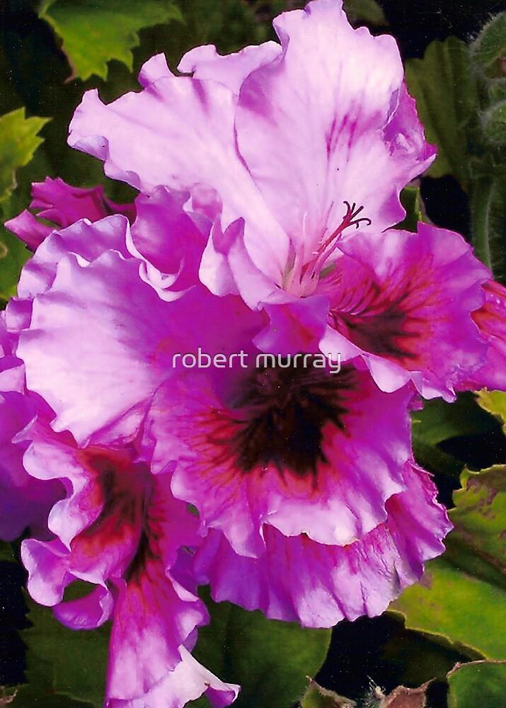 hibiscus #2 by robert murray