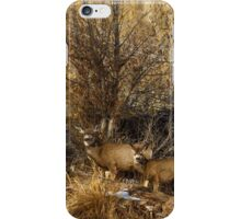 MULE DEER FAMILY iPhone Case/Skin