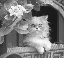 PERSIAN CAT  by JENL2711