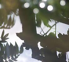 REFLECTION ON A POND by JENL2711