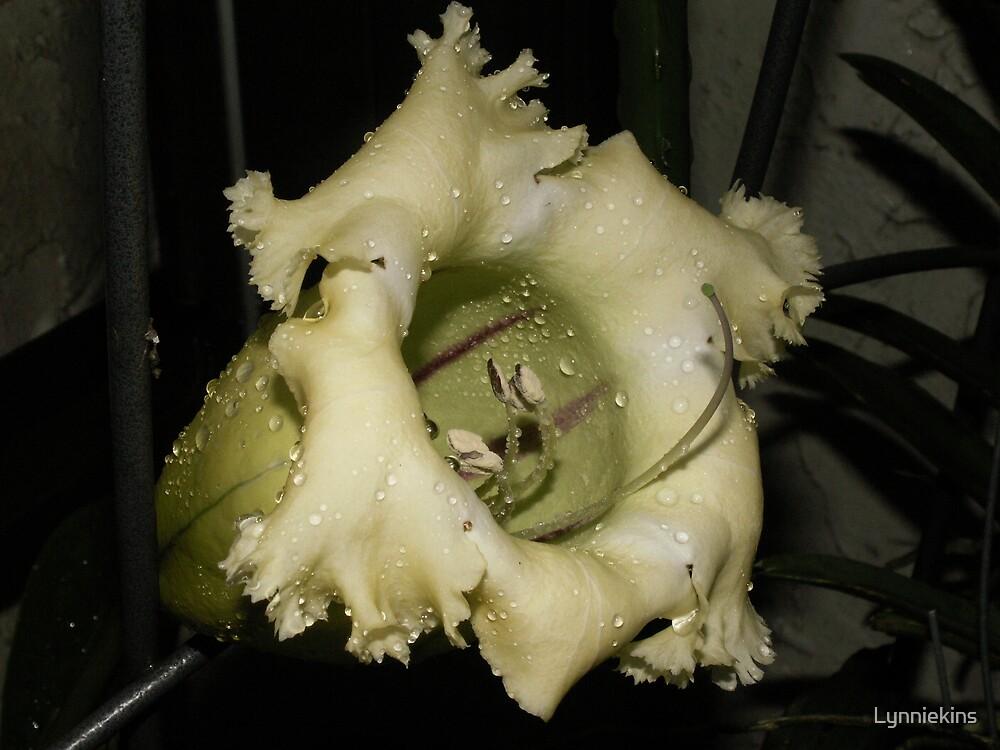 Mystery Flower by Lynniekins