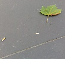 Leaft behind by Mr Nokia