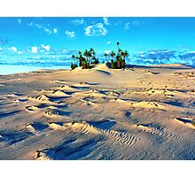 Sandforms and Pandanus Stand, Cape Leveque Photographic Print