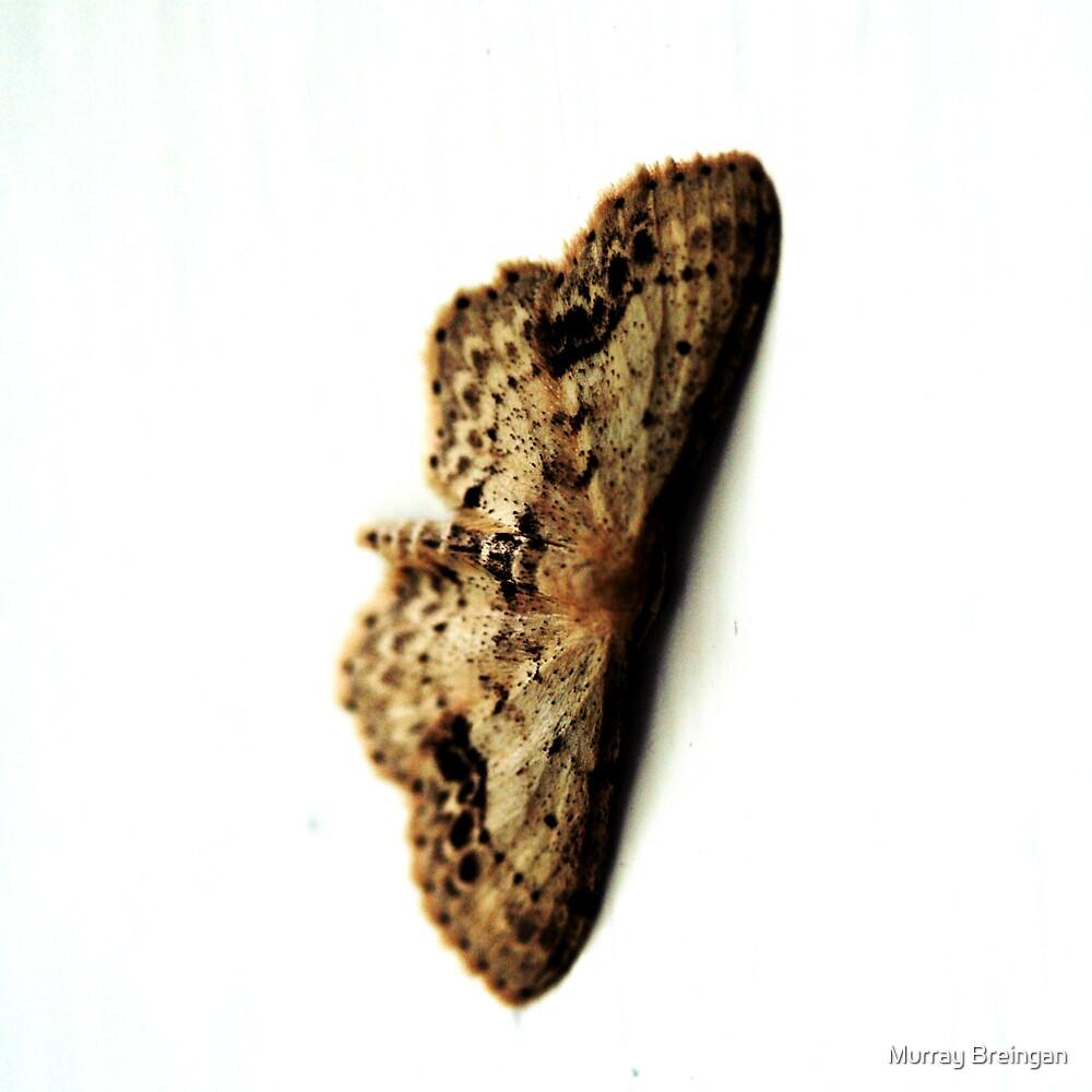 Moth by Murray Breingan