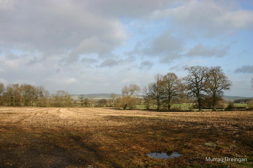 Wiltshire, UK by Murray Breingan