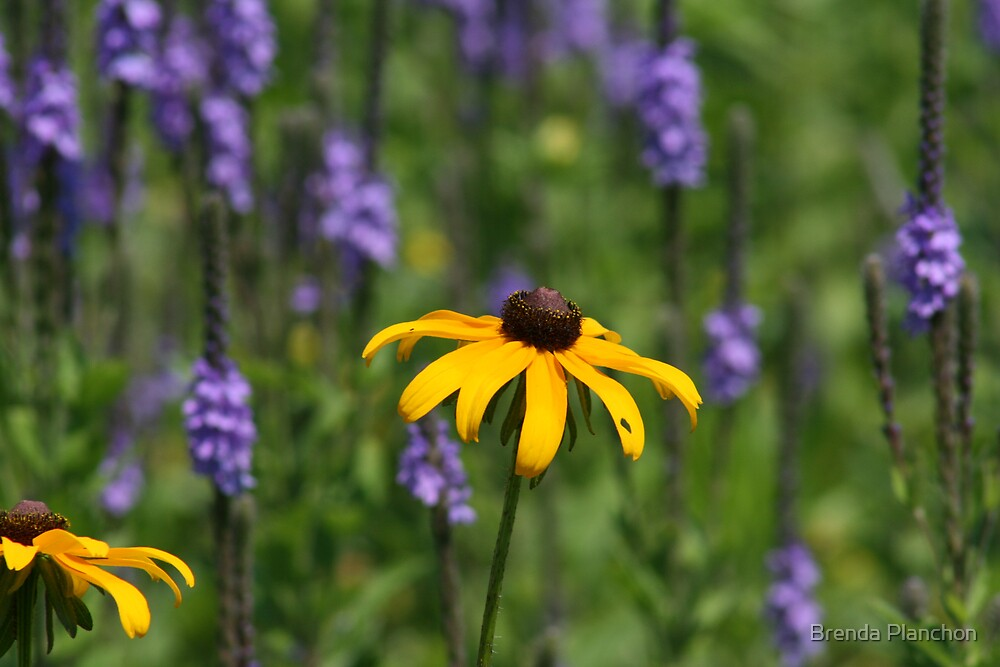 EARLY SUMMER WILDFLOWERS by Brenda Planchon