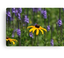 EARLY SUMMER WILDFLOWERS Canvas Print