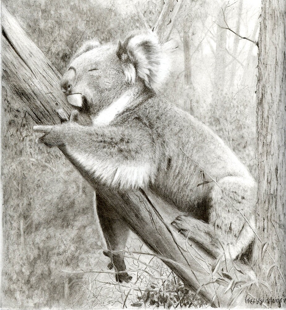 korala bear by terry morris