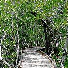 Tree Path by Michael Murphy