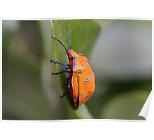 Cotton Harlequin Bug 11 Poster