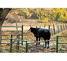 Bullish on Autumn Photographic Print