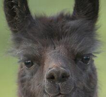 Llama4 by Neil