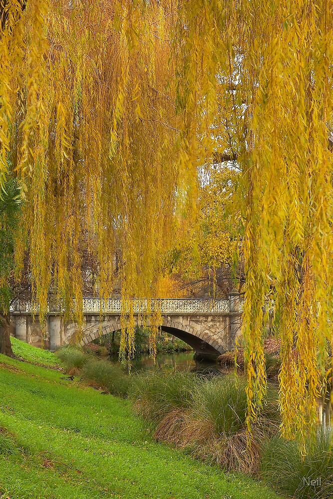 Avon River - Christchurch, New Zealand by Neil