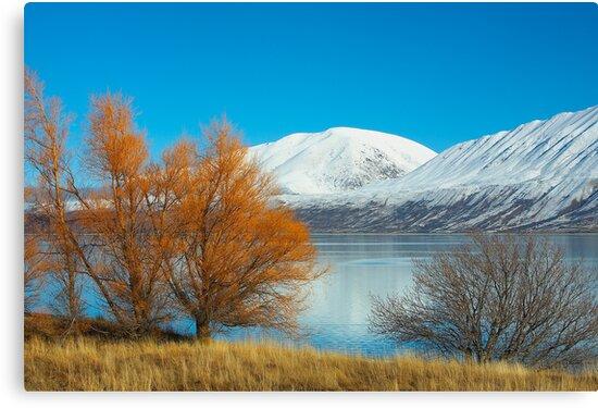 Winter colour by Neil