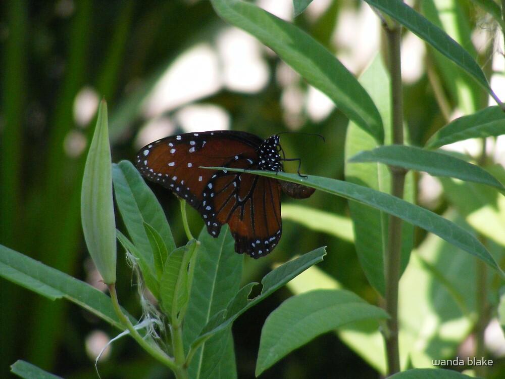 monarch by wanda blake