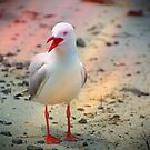 Seagull by Greg Carrick