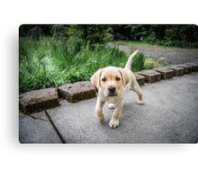 Puppy!!! Canvas Print