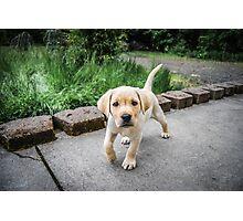 Puppy!!! Photographic Print