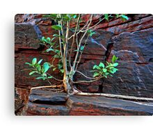 Fig Detail, Joffre Gorge, Karijini NP Canvas Print