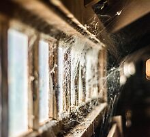 WIndow Webs by Candice84