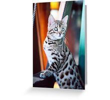 Bengal Kitten 2 Greeting Card