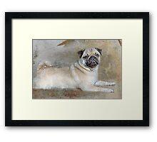 Pug Pose Framed Print