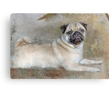Pug Pose Canvas Print
