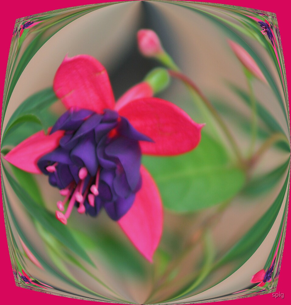 Fusia by spig