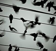 Pigeons by Bryan Villamin