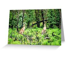 kangaroos, NSW, Australia Greeting Card