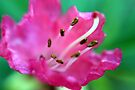 pink and green by Helen  Page