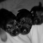 2 day old puppies by delacruzgs