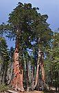 Clothespin Tree 3 by Alex Preiss
