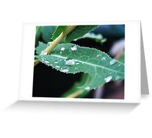 Perfect Drops Greeting Card