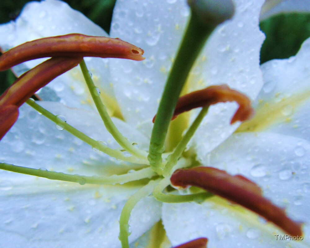Centered In The Rain by TMPhoto