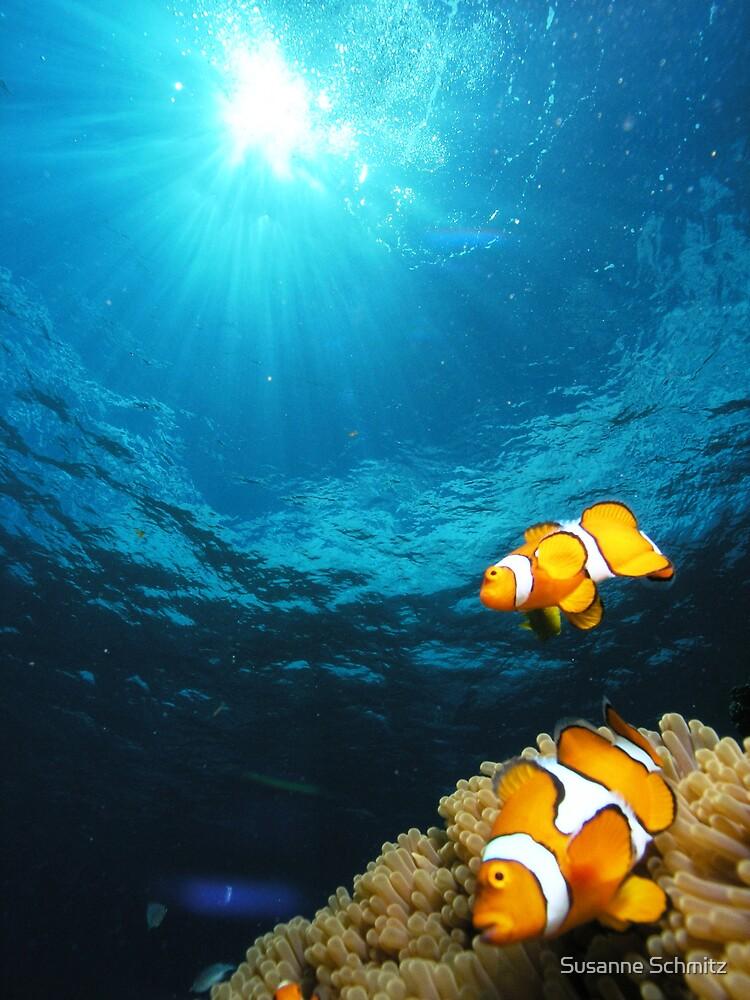 clownfish - great barrier reef - Cairns, Australia by Susanne Schmitz