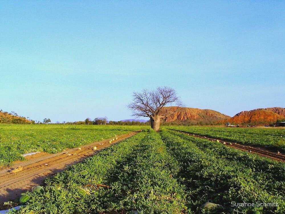 boab tree on a melon field by Susanne Schmitz