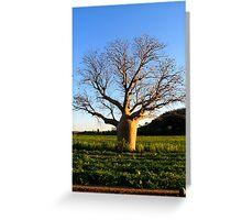 boab tree on a melon field Greeting Card