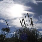 pampas gras at the beach by Susanne Schmitz