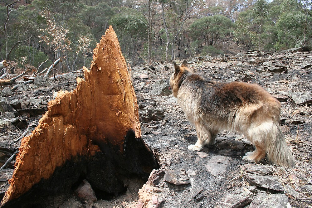 Fallen Tree & Hamlet by Bronwyn  Murphy