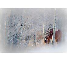 Morning Solitude Photographic Print