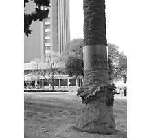 possum warfare Photographic Print