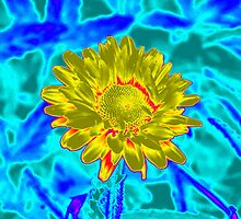 Blue/Yellow Flower (title pending) by Scott Mitchell