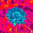 Pink / Blue flower title pending by Scott Mitchell