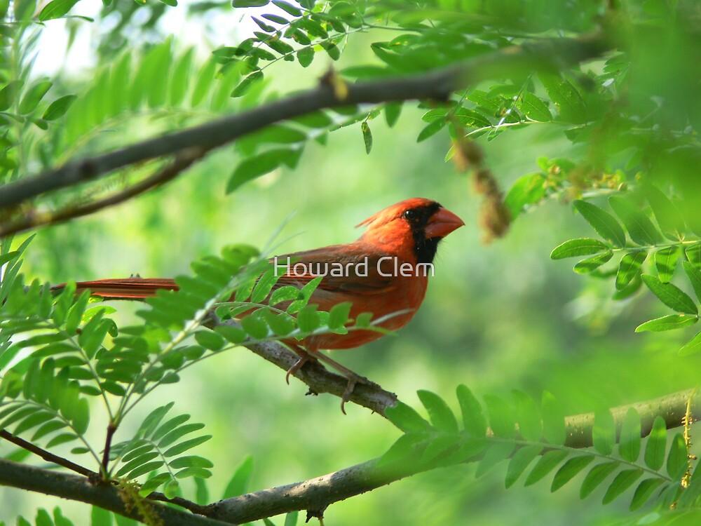 Cardinal by Howard Clem