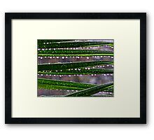 Nature's Chandelier Framed Print