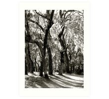 Ghost Trees (B & W) Art Print