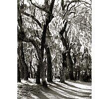 Ghost Trees (B & W) Photographic Print