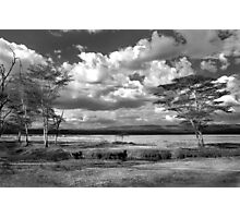 The plains where the zebra and buffalo roam Photographic Print